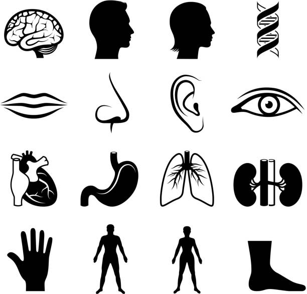 human anatomy and senses black & white vector icon set vector art illustration