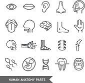 Human anatomy body parts detailed icons set.