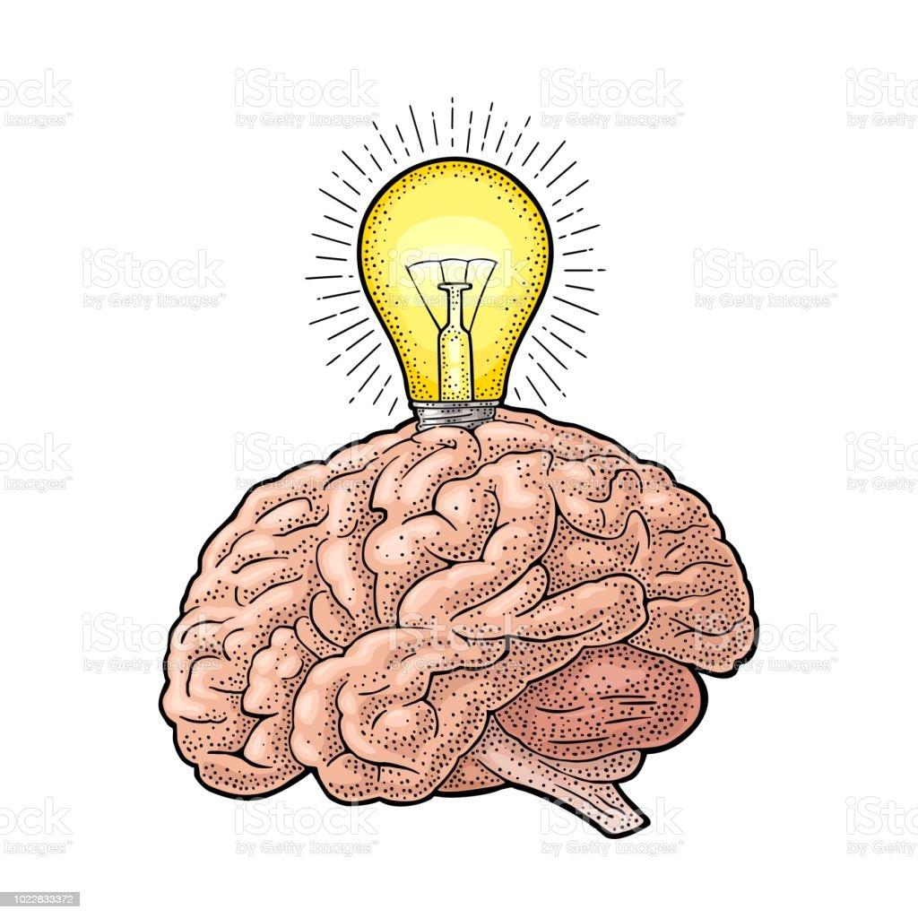 Human anatomy brain and glowing light incandescent bulb. Vector engraving - illustrazione arte vettoriale