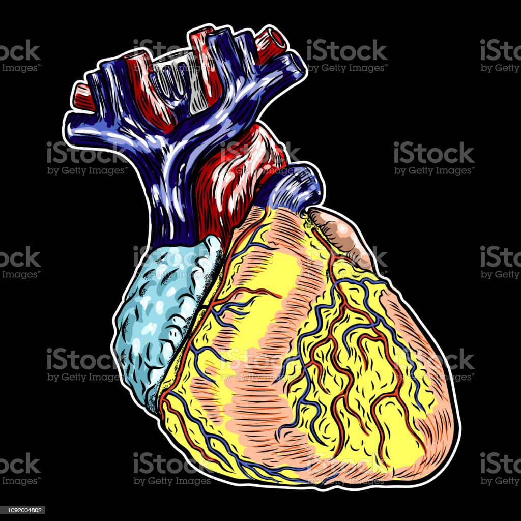 human body diagram tattoo human anatomy heart black and color engraving isolated on  human anatomy heart black and color