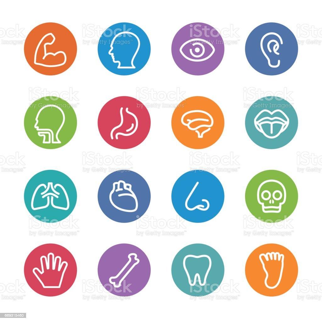 Human Anatomy Icons - Circle Line Series vector art illustration