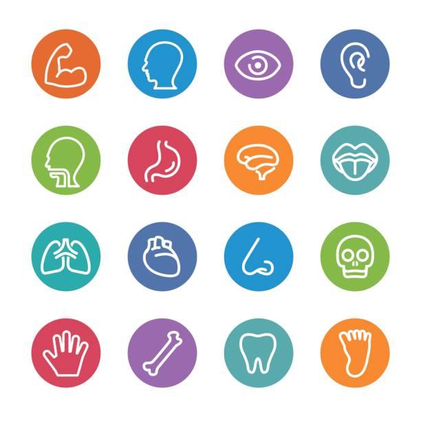menschliche anatomie icons - circle line serie - farbwahrnehmung stock-grafiken, -clipart, -cartoons und -symbole