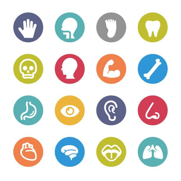 menschliche anatomie-icons-kreis serie - farbwahrnehmung stock-grafiken, -clipart, -cartoons und -symbole