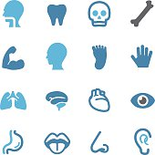 Human Anatomy Icons - Conc Series