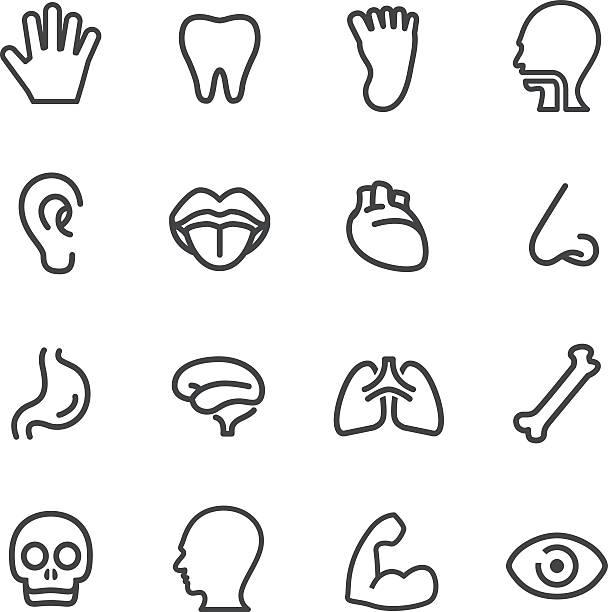 menschliche anatomie-icons-line serie - farbwahrnehmung stock-grafiken, -clipart, -cartoons und -symbole