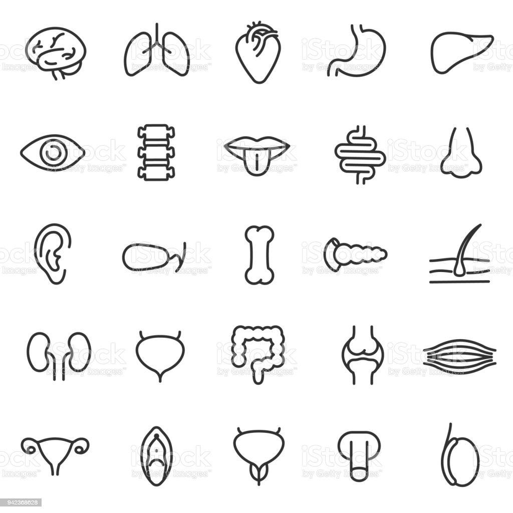 human anatomy icons set. internal organs, body parts. Editable stroke vector art illustration