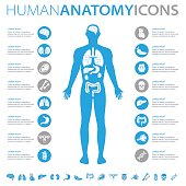 istock Human Anatomy Icons 643659646
