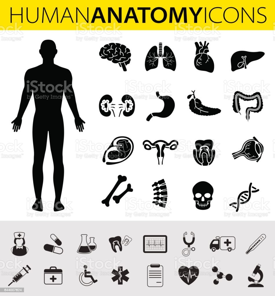 Human Anatomy Icons vector art illustration