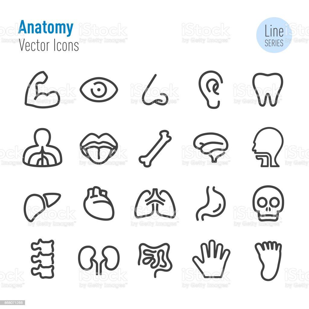 Anatomía Humana Iconos Vector Línea Serie - Arte vectorial de stock ...