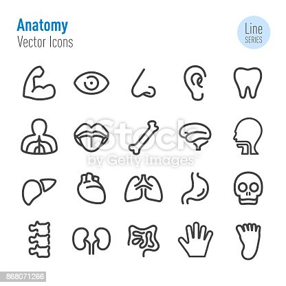 Anatomy, internal organ, Medicine, Human Body,