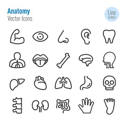 Human Anatomy Icons - Vector Line Series