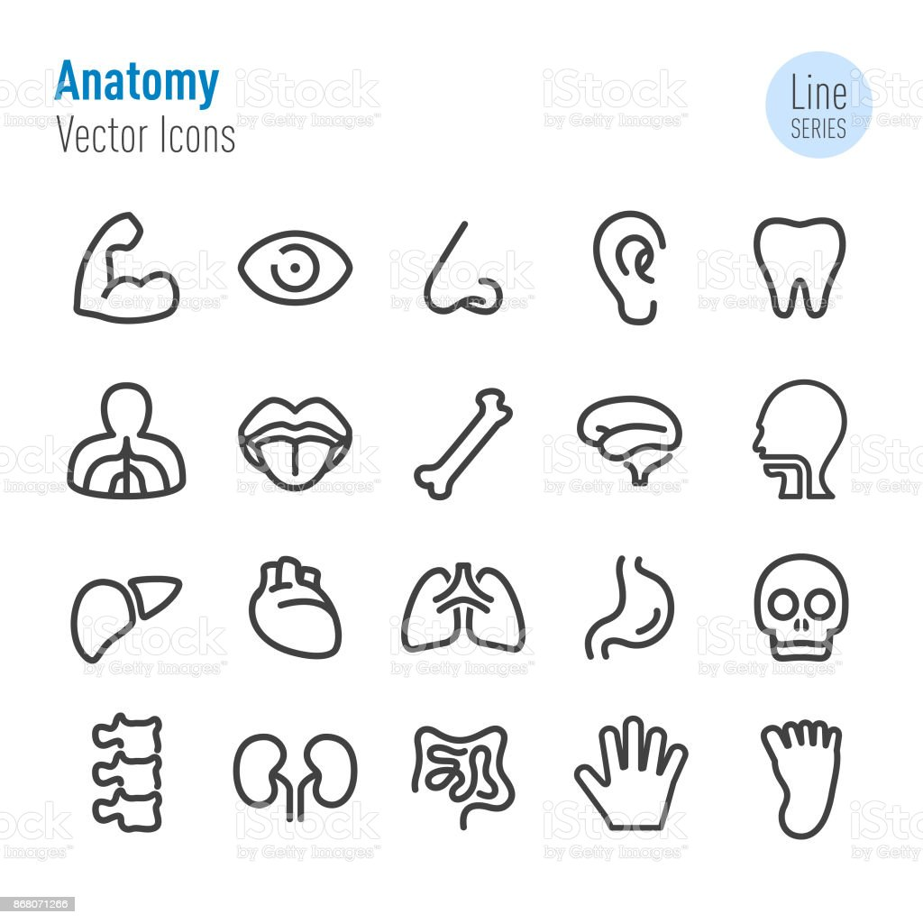 Human Anatomy Icons - Vector Line Series vector art illustration