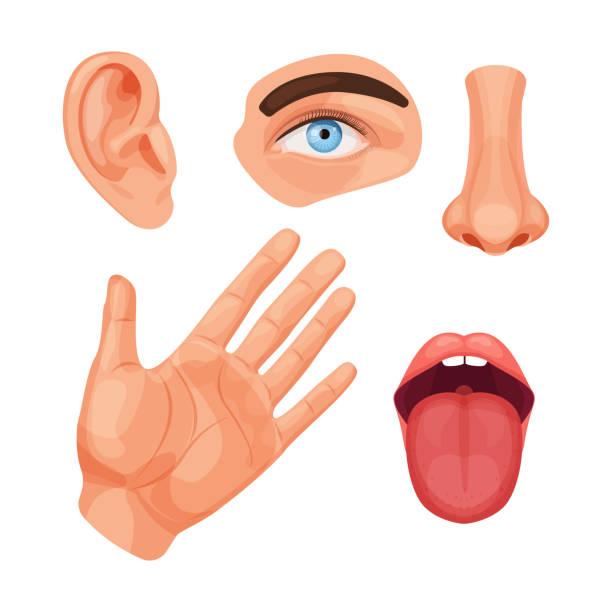 illustrazioni stock, clip art, cartoni animati e icone di tendenza di human anatomy organs, biology, body structure vector - ear talking
