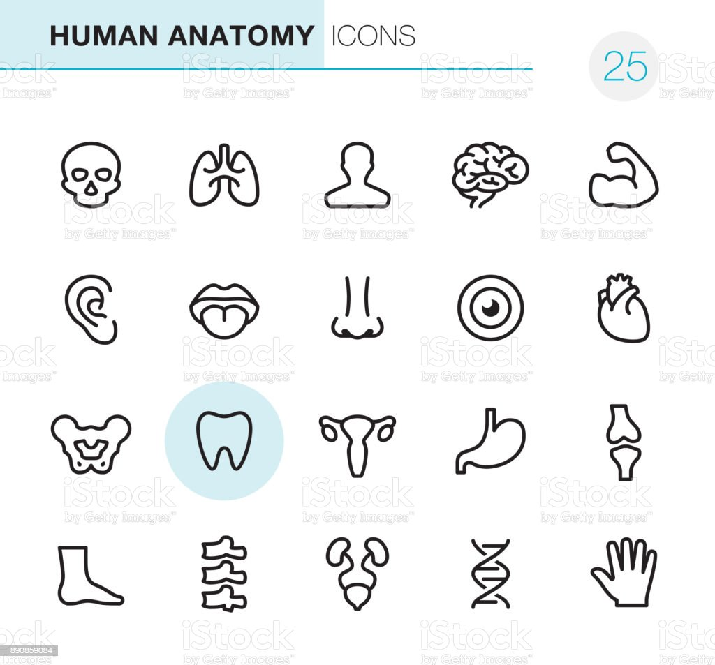 Human Anatomy - Pixel Perfect icons vector art illustration