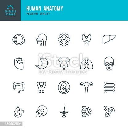 Set of 20 Human body anatomy line vector icons. Head, Skull, Brain, Heart, Liver, Eye, Stomach, Lungs, Spine, Lips, Ear, Nose and so on