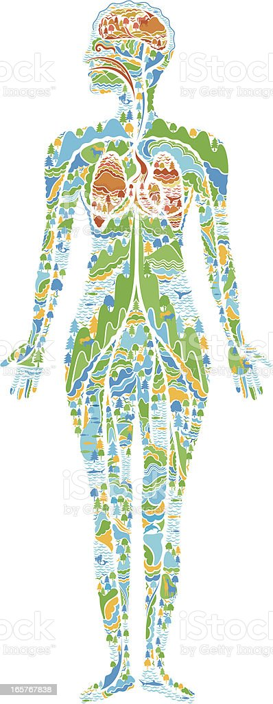 human anatomy vector art illustration