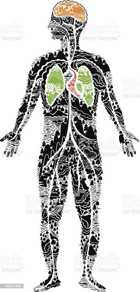 human anatomy vector art illustration