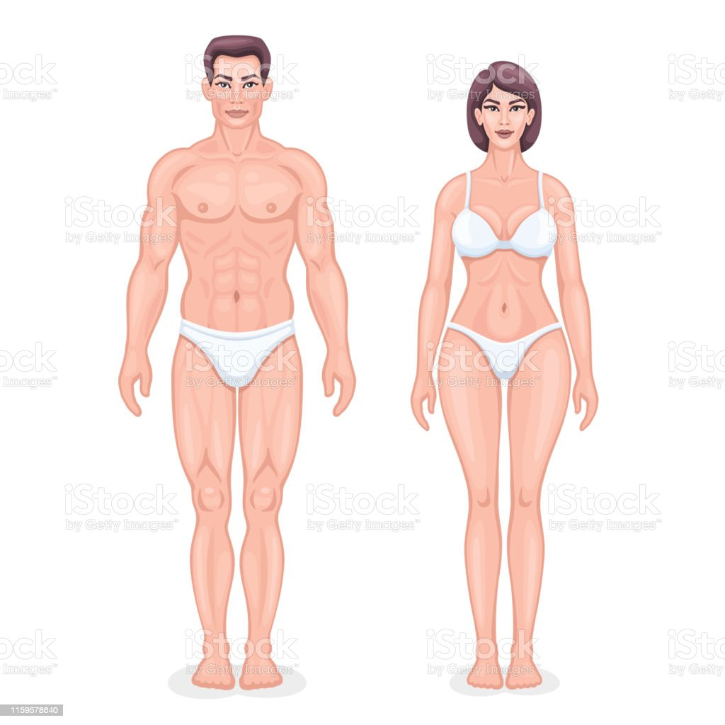 human anatomy vector stock illustration download image now istock human anatomy vector stock illustration download image now istock