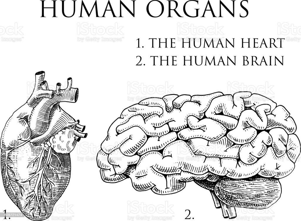 Charmant Anatomie Und Physiologie Atmungssystemtest Ideen - Anatomie ...