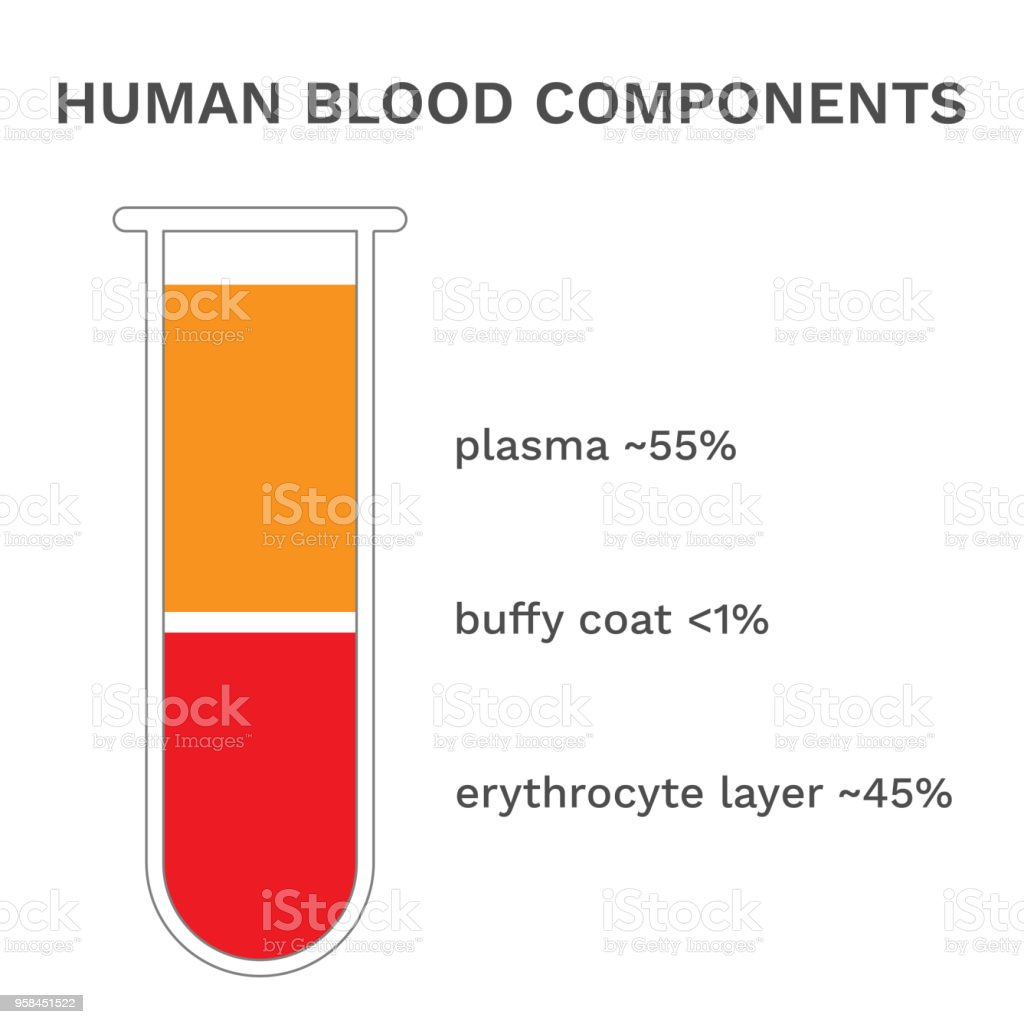 Human blood components. Fractioned blood in tube. Vector vector art illustration