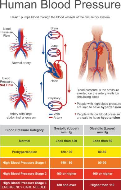 Human Blood Pressure. vector art illustration