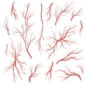 Human blood veins and arteries vector set