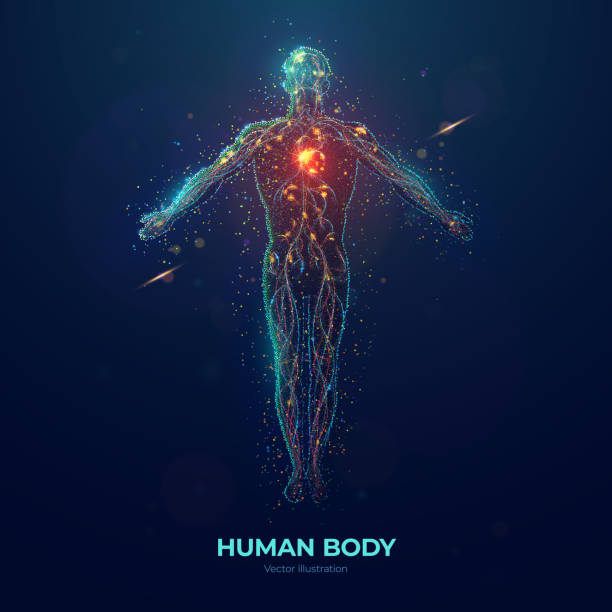 Human body abstract particles illustration Human body front view abstract vector illustration made of colored neon particles on blue background the human body stock illustrations