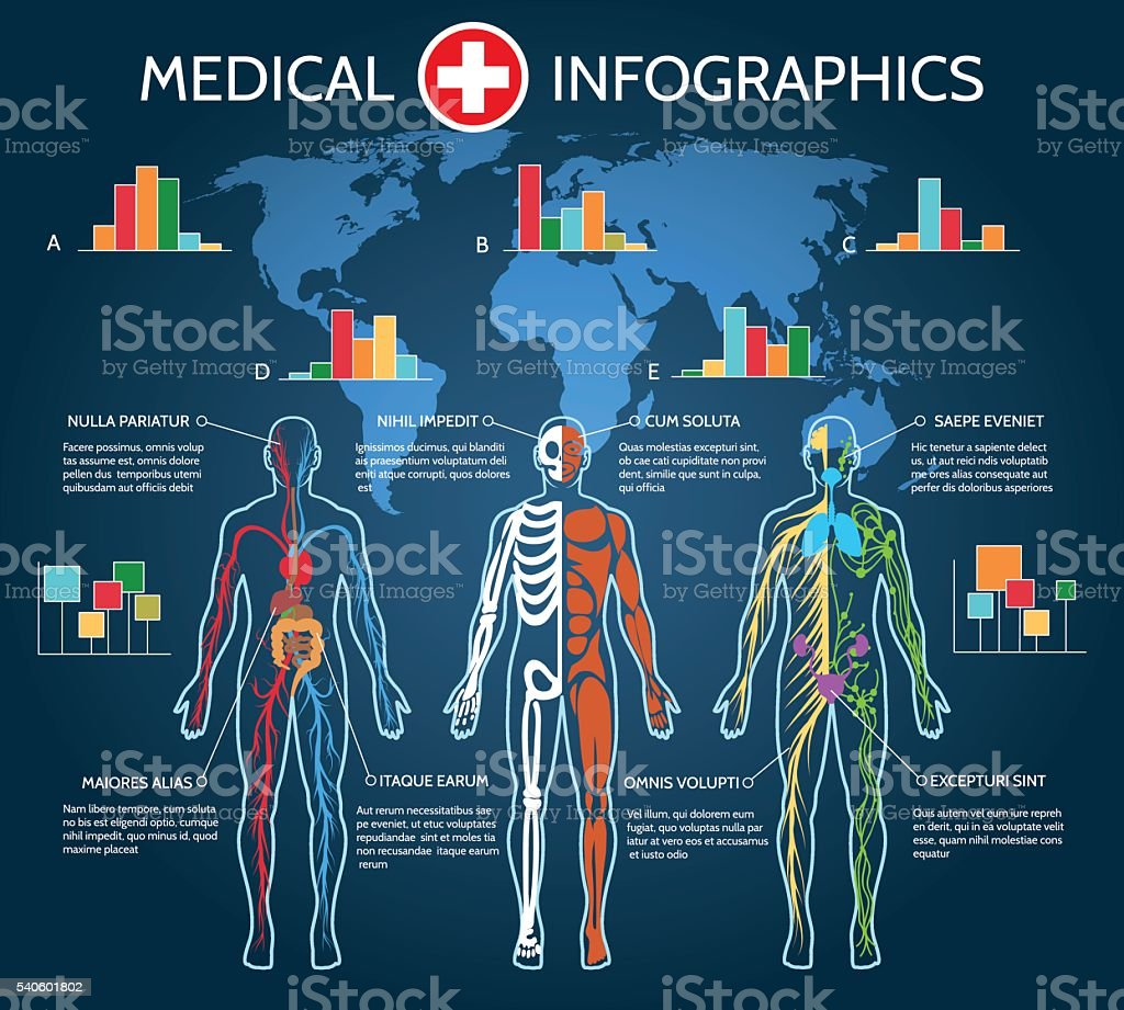 Human Body Anatomy Infographic vector art illustration