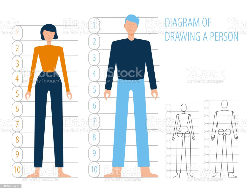 Human Body Anatomy Man And Woman Scheme Of Building And Drawing Simple Flat Humanecartoon Vector Body Structures In Full Growth Stock Illustration Download Image Now Istock