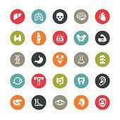 Human body and internal organ related vector icons / Ringico series