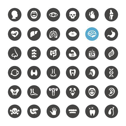 Human Body and Internal Organ vector icons