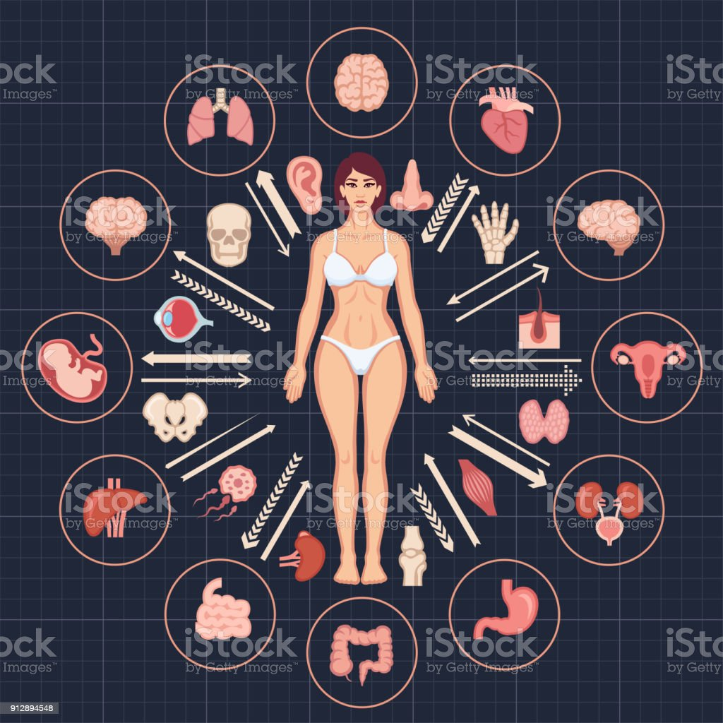 Human body and internal organs vector art illustration
