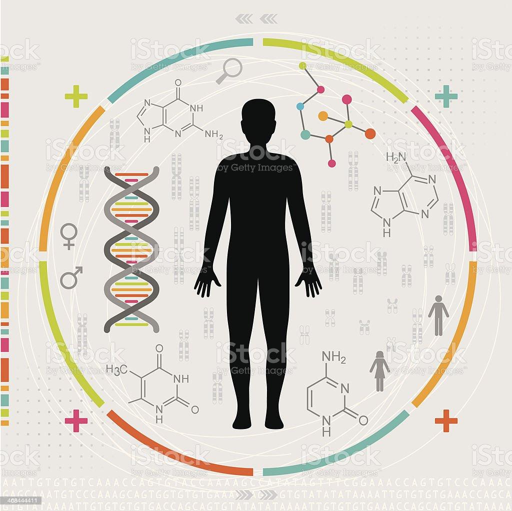 O corpo humano, dos genes e Chromosomes DNA - ilustração de arte em vetor