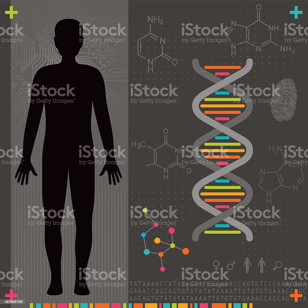 Human Body - DNA royalty-free stock vector art