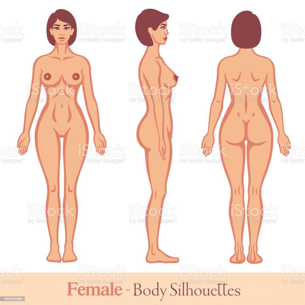 Menschlichen Körper Weiblich Stock Vektor Art und mehr Bilder von ...