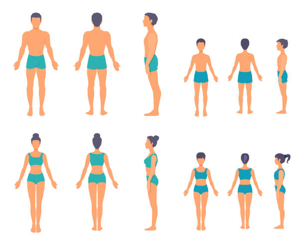 Human body from different sides. Front, back, side view. Full-length people bodies without faces. Family standing still. Vector illustrations set. little girls in panties stock illustrations