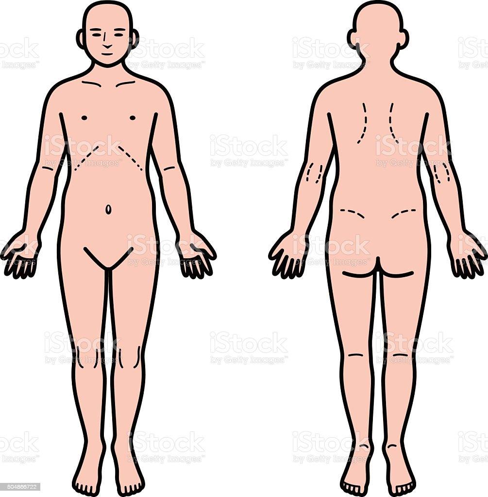 Ilustración de Cuerpo Humano La Parte Delantera Y Trasera y más ...