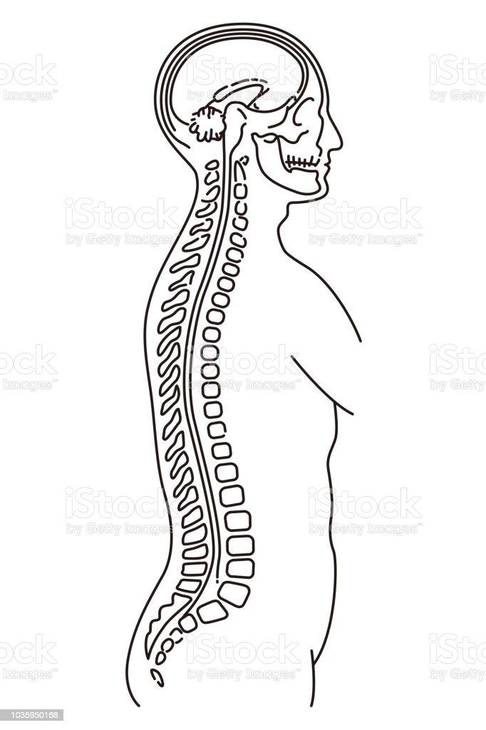 Human body illustration of MRI examination vector art illustration