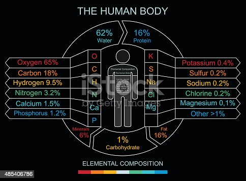 istock Human Body Infographics in Linear Style 485406786