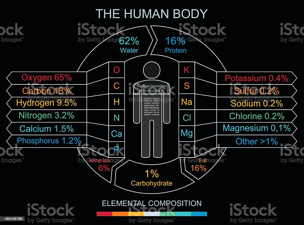 Human Body Infographics in Linear Style vector art illustration