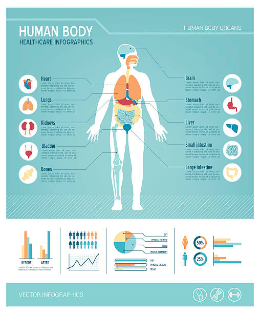 Human body infographics Human body health care infographics, with medical icons, organs, charts, diagarms and copy space biomedical illustration stock illustrations