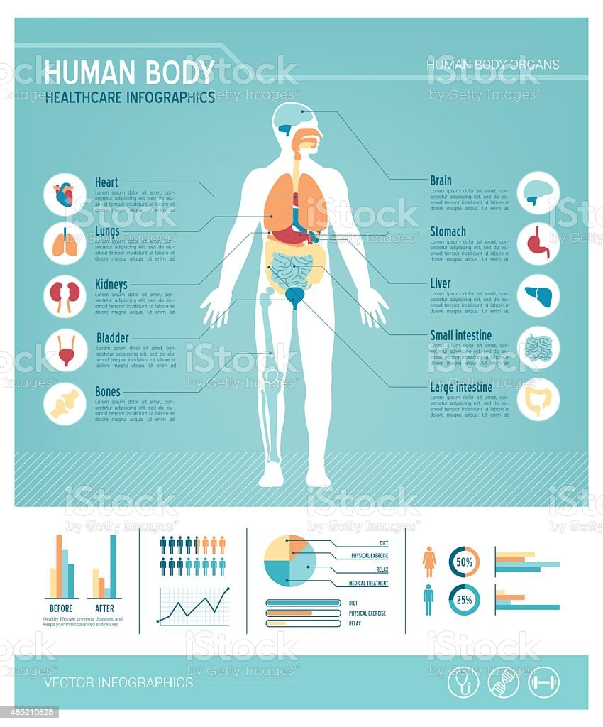Human body infographics vector art illustration