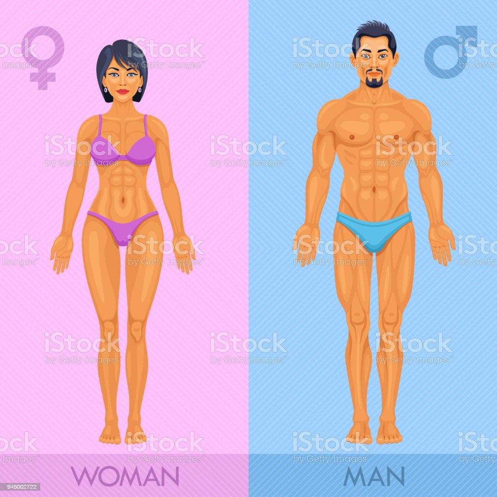 Menschlichen Körper Männlich Und Weiblich Stock Vektor Art und mehr ...