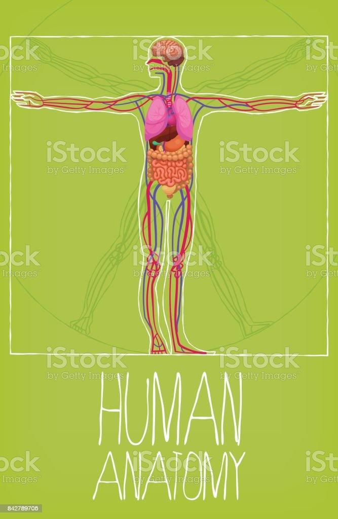 Menschlichen Körperorganen Vektor Illustration 842789706 | iStock