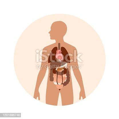 istock Human body organs vector illustration 1201695740