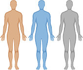 Human body outline in three colors