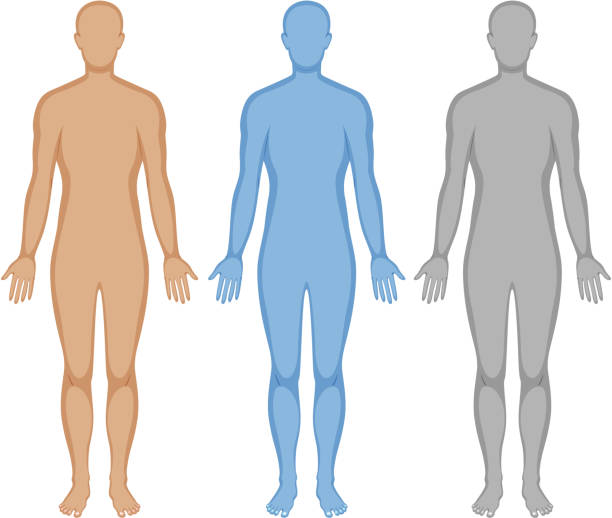 Human body outline in three colors Human body outline in three colors illustration biomedical illustration stock illustrations