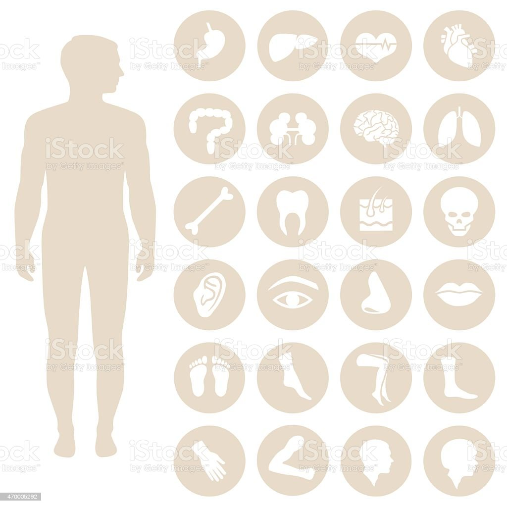 human body parts anatomy vector art illustration