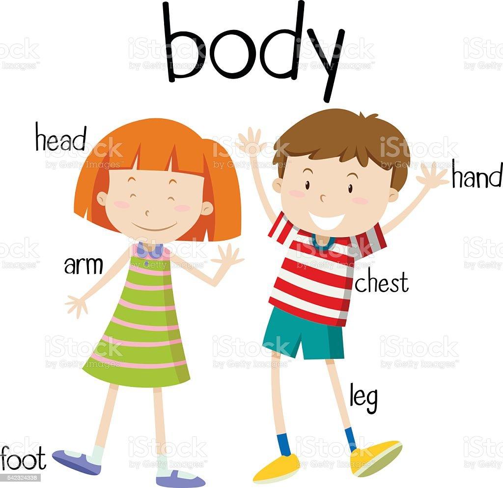Menschlicher Körper Teile Diagramm Stock Vektor Art und mehr Bilder ...