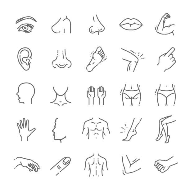 stockillustraties, clipart, cartoons en iconen met menselijke lichaamsdelen iconen kunststof gezicht chirurgie, medische vector iconen - nek